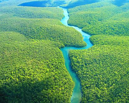 Découvrez l'Amazonie, les excursions dans la jungle et les mystères de l'Amazonie