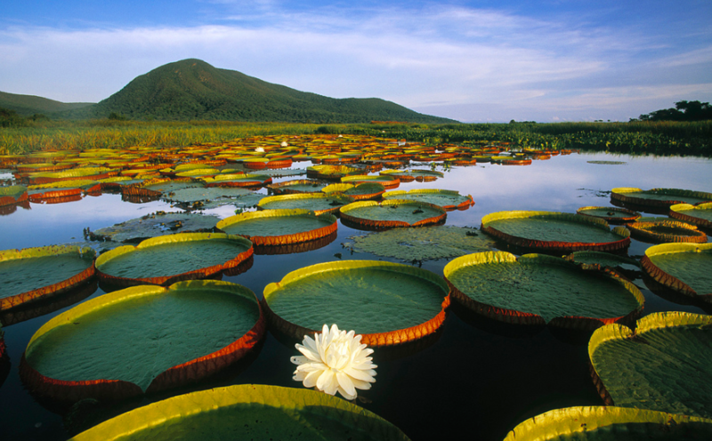 Pantanal, la plus grande zone humide du monde